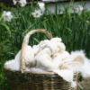 basket of handknit blanket and handspun cashmere yarn